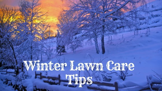 is it okay to fertilize your lawn during winter?