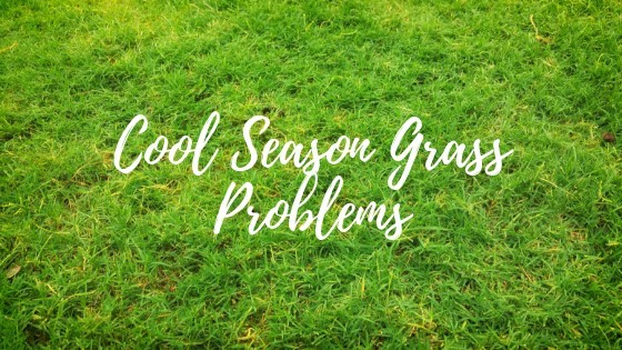cool season grass problems